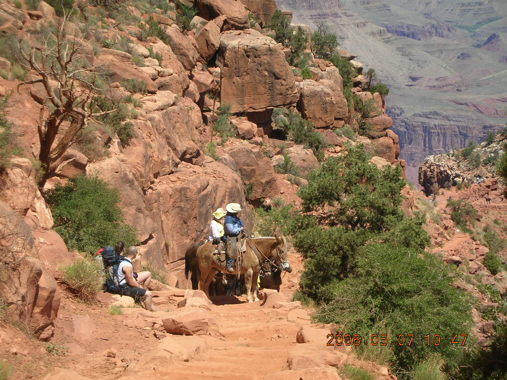 view from South Kaibab trail -- mule pack