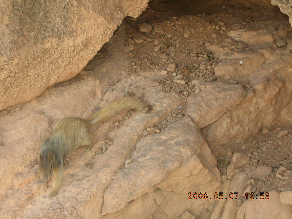 view from South Kaibab trail -- cute squirrel