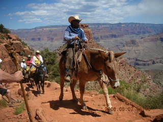 20 5t7. view from South Kaibab trail -- mule pack