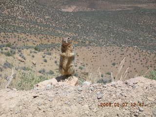84 5t7. view from South Kaibab trail -- cute squirrel