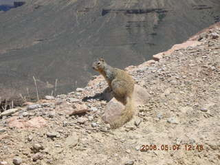 87 5t7. view from South Kaibab trail -- cute squirrel