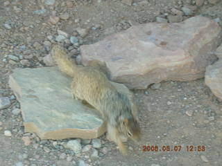 91 5t7. view from South Kaibab trail -- cute squirrel