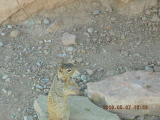 92 5t7. view from South Kaibab trail -- cute squirrel