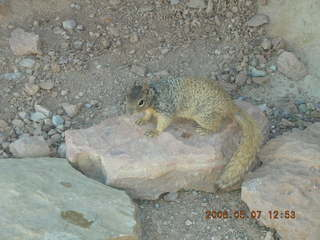 93 5t7. view from South Kaibab trail -- cute squirrel