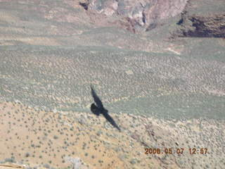 view from South Kaibab trail -- flying black bird