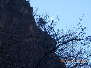 61 6cw. Zion National Park- Observation Point hike - moon