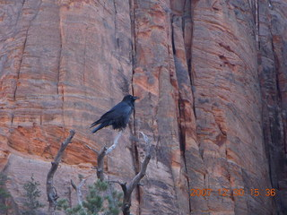 342 6cw. Zion National Park - Canyon Overlook hike - bird