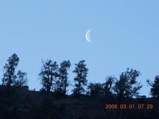 Zion National Park - Watchman hike - moon over trees