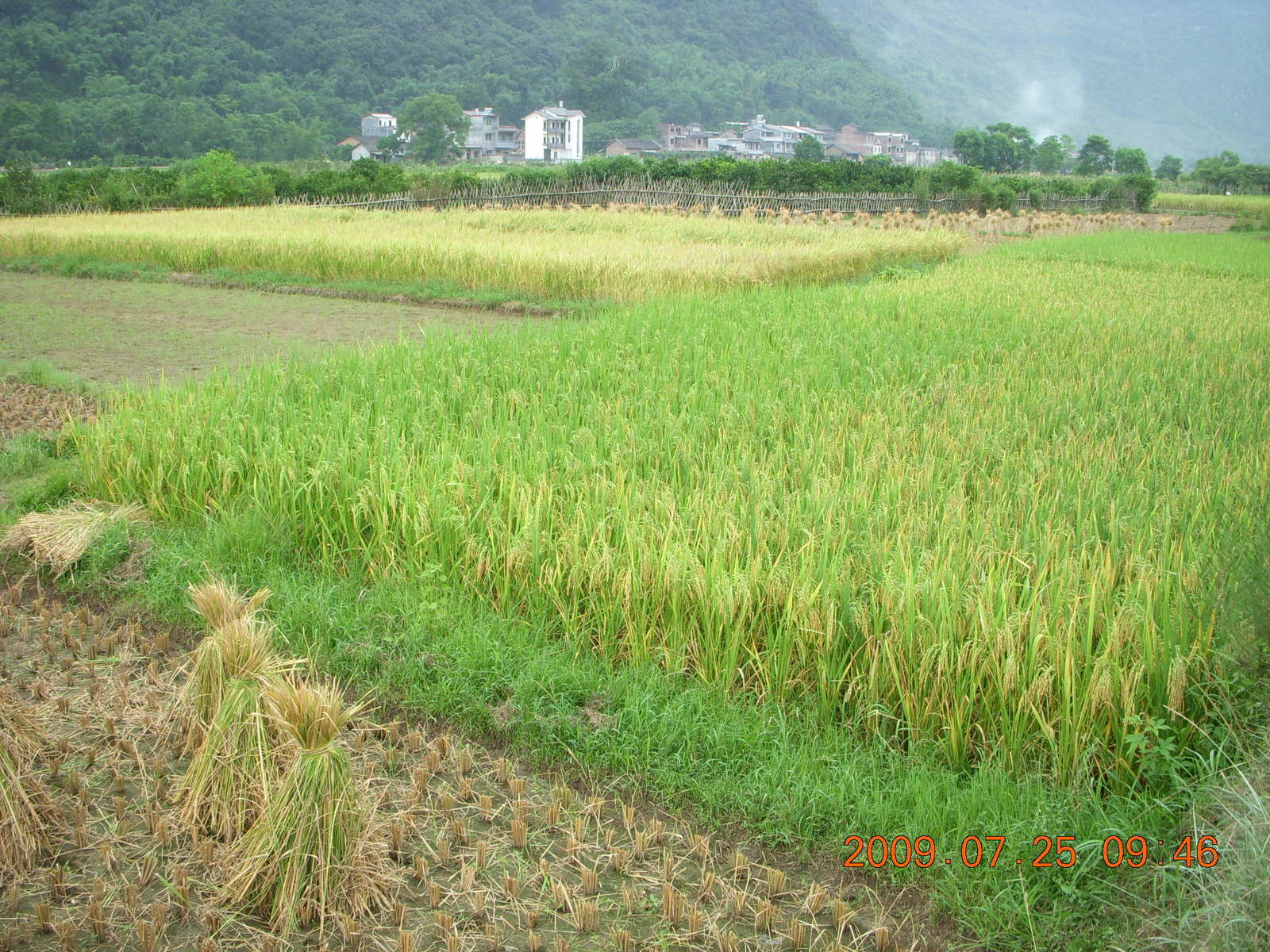 China eclipse - Yangshuo bicycle ride - walk to farm village - rice