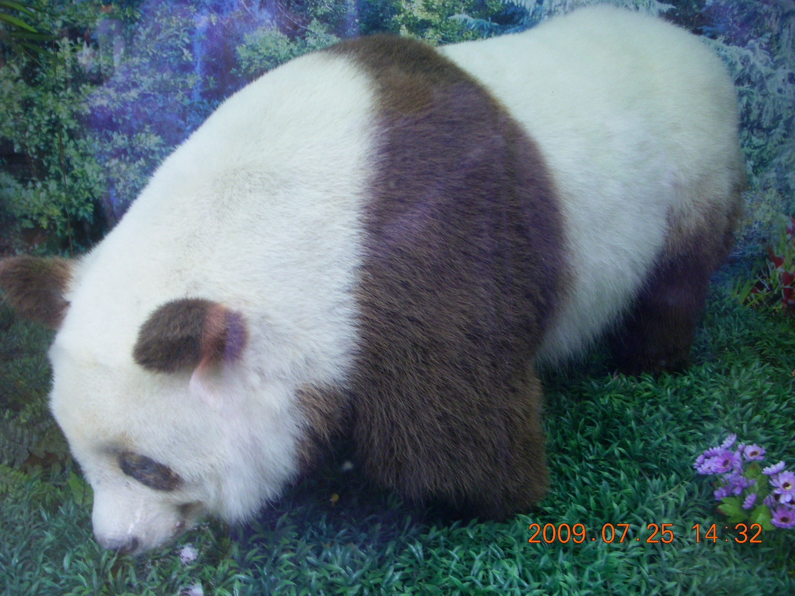 China eclipse - Guilin SevenStar park - panda mockup