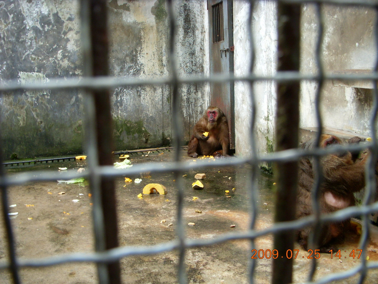 China eclipse - Guilin SevenStar park - monkey zoo