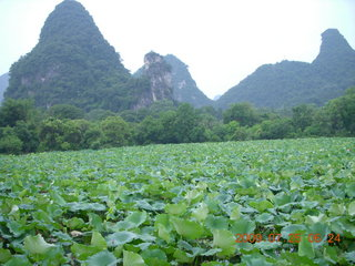 China eclipse - Yangshuo run - lotuses