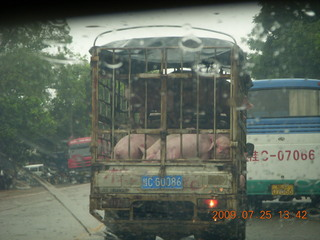 221 6xr. China eclipse - drive in the rain from Yangshuo to Guilin - pigs