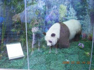 229 6xr. China eclipse - Guilin SevenStar park - panda mockup