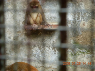 247 6xr. China eclipse - Guilin SevenStar park - monkey zoo