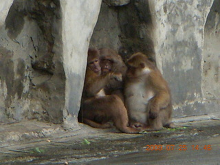 250 6xr. China eclipse - Guilin SevenStar park - monkey zoo