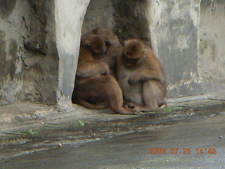 251 6xr. China eclipse - Guilin SevenStar park - monkey zoo
