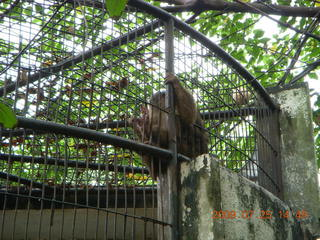 257 6xr. China eclipse - Guilin SevenStar park - monkey zoo