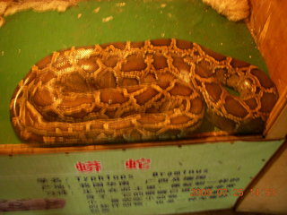 259 6xr. China eclipse - Guilin SevenStar park - reptile house - big snake