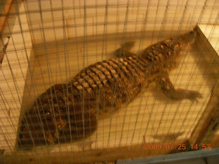 260 6xr. China eclipse - Guilin SevenStar park - reptile house - alligator or crocodile