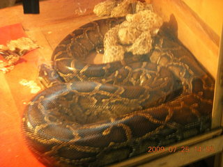 263 6xr. China eclipse - Guilin SevenStar park - reptile house - big snake